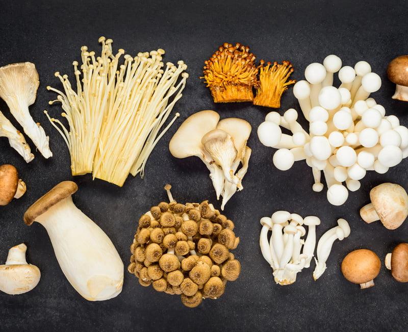 content грибы3