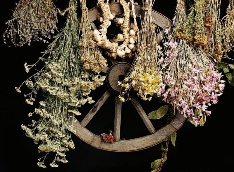 content dried herbs in folk medicine2020 econet ru