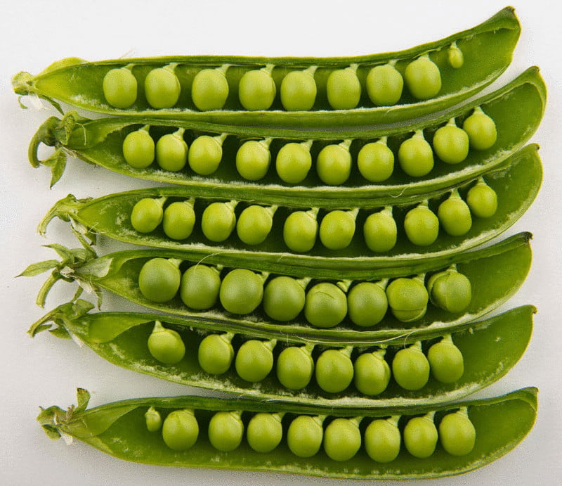 content medicinal properties of peas econet ru