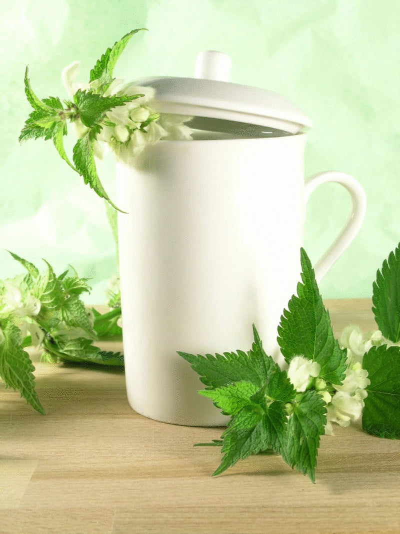 content tea nettle