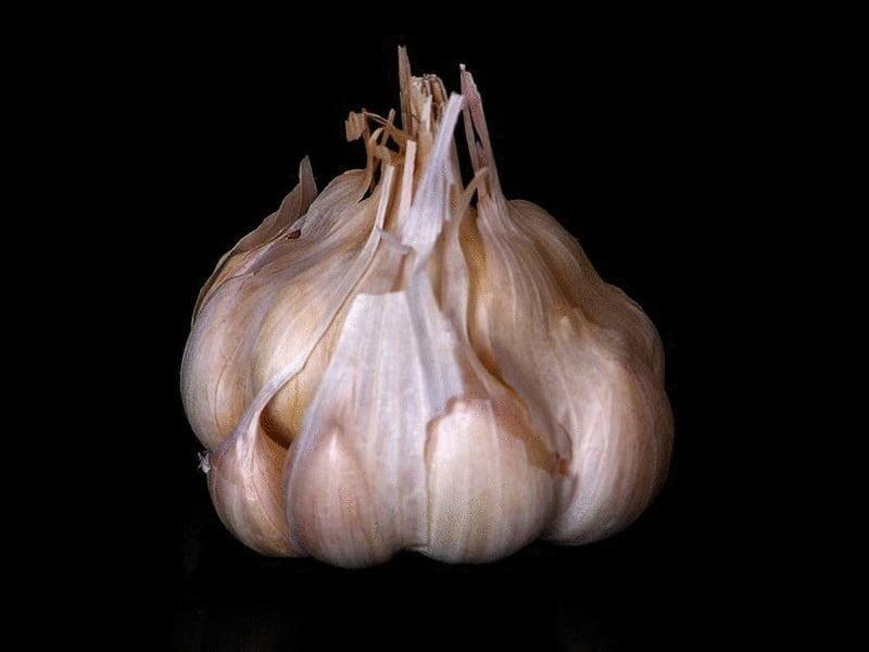content tincture of garlic husk
